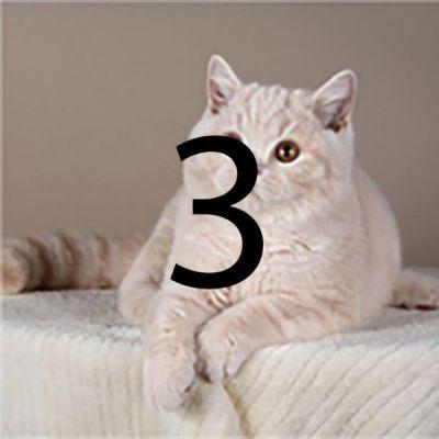 cat1-3