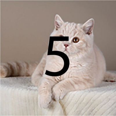cat1-5